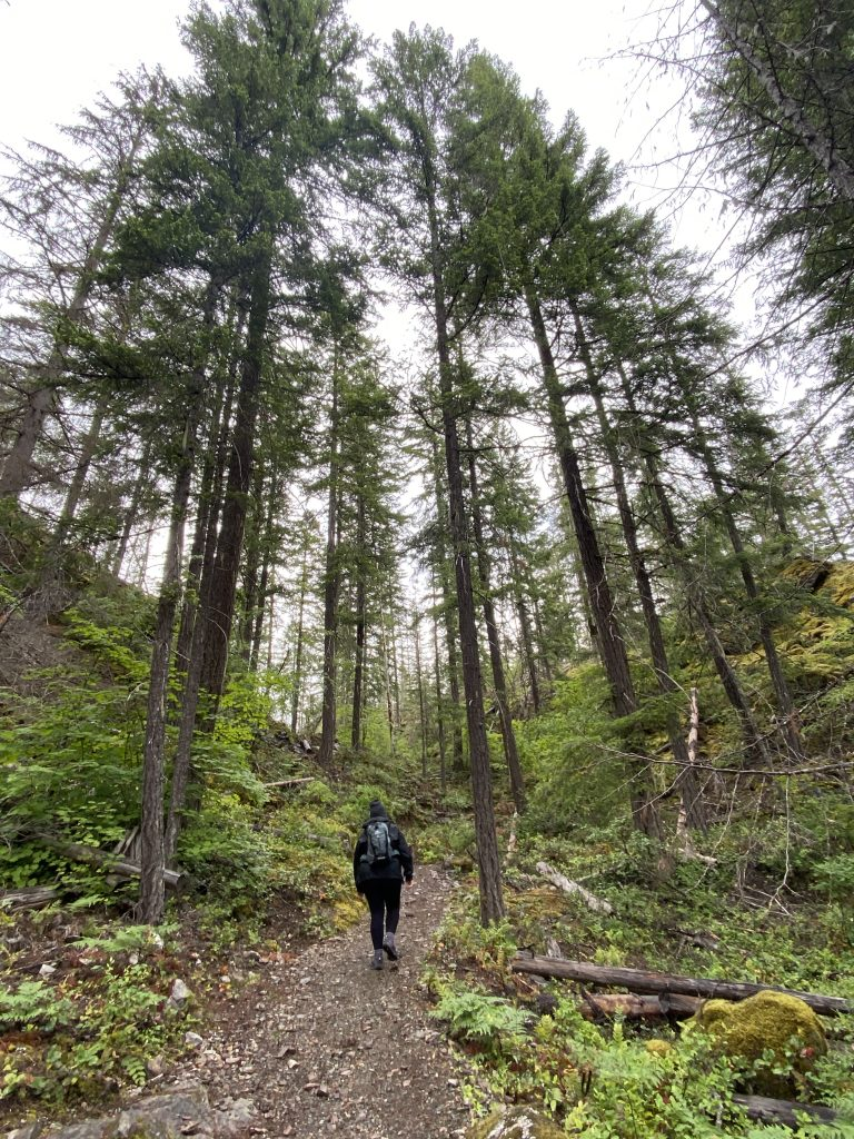 Girl hiking surrounded by large trees